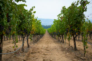 Labor Day at Andretti Winery, Napa California